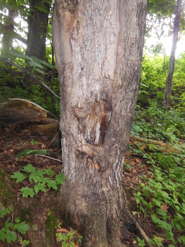 cool looking tree trunk